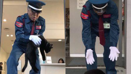 La guardia pagata (anche) per non fare entrare gatti: la curiosa scena in Giappone