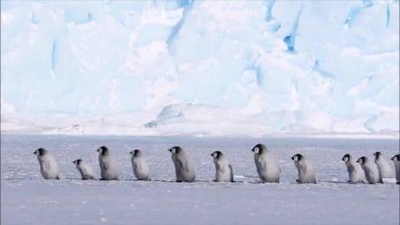 La scolaresca in fila indiana sul ghiaccio: lo spettacolo è bellissimo