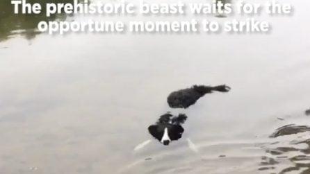 Si avvicina all'acqua e trova il suo cane immobile