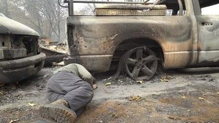 Tutto è andato bruciato ma c'è ancora una vita da salvare: la scena straziante