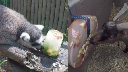Come preparare ghiaccioli per gli animali: così si difendono dal caldo eccessivo