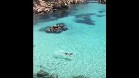 """La """"Tahiti"""" della Sardegna: un tuffo nel mare cristallino di Cala Coticcio"""