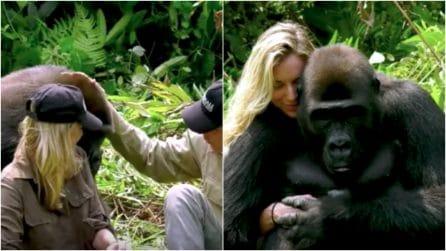 Il gorilla Ima incontra i suoi salvatori dopo 4 anni: la reazione dell'animale è commovente