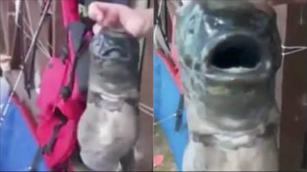 I pescatori trovano un pesce con due bocche: l'impressionante mutazione