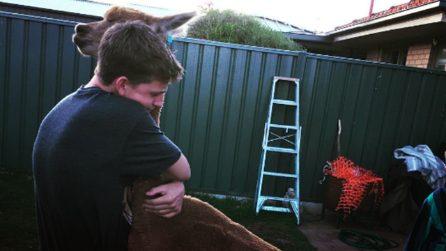 Salva la vita ad un alpaca che diventa il suo migliore amico. La loro storia è emozionante