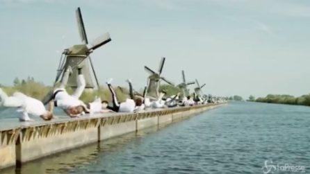 Olanda, breakdance e mulini a vento: 70 ballerini per un record spettacolare