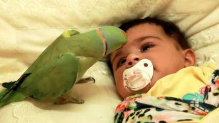 Un pappagallino come babysitter: canta e gioca per far smettere di piangere la piccola