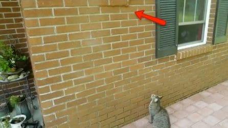 Un pericoloso animale si è mimetizzato nel muro: la scoperta da brividi in cortile