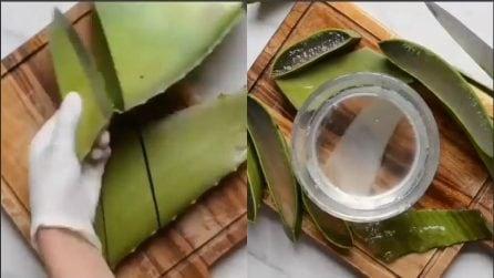 Taglia l'aloe vera e crea un ottimo rimedio naturale