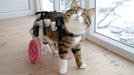Rexie, il gatto invalido star del web che ha tanto da insegnare anche agli esseri umani