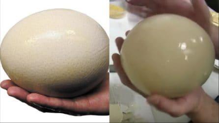 Uova di struzzo: un'ottima ricetta per cucinarle