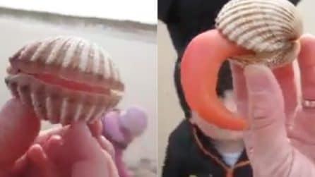La conchiglia si apre e tutti restano senza parole: la bizzarra scena in spiaggia