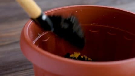 Mette una spugna nel vaso e la ricopre di terriccio: il motivo è davvero ingegnoso