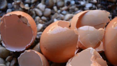 Come fare del fertilizzante fatto in casa: bastano dei gusci d'uovo