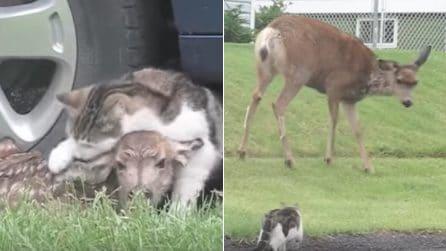 Cane e gatto si avvicinano troppo al suo cerbiatto: la terribile reazione della mamma