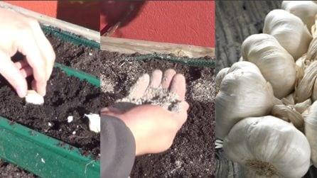 Mette uno spicchio d'aglio nel terreno e sparge la cenere: un metodo semplice per avere altre piante