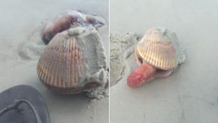 """La conchiglia si muove all'improvviso: il momento in cui un mollusco """"cammina"""" sulla spiaggia"""