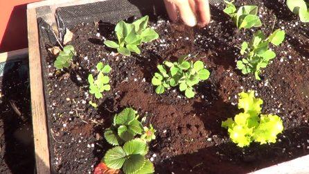 Repellente naturale per proteggere le piante: il trucchetto immediato