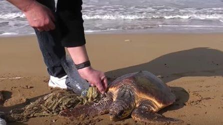 Una tartaruga intrappolata tra i rifiuti: la terribile scoperta sulla spiaggia