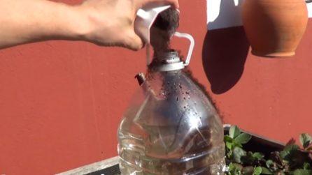 Come riutilizzare i fondi del caffè: un fertilizzante super per le piante