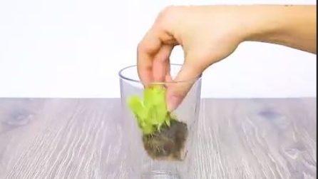 Mette la parte finale della lattuga in un bicchiere: un trucchetto molto interessante