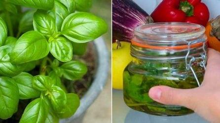 Basilico sott'olio: il trucco per conservarlo in inverno