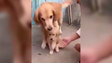 Tentano di toccare il suo cucciolo: la reazione della cagnolina vi stupirà
