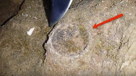 I biologi notano un cerchio perfetto nel terreno: la sorprendente scoperta
