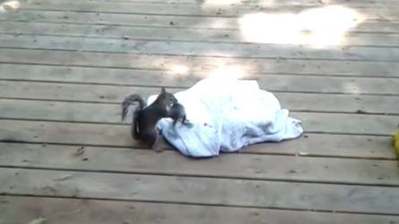 Trova un piccolo scoiattolo in cortile: la mamma torna per salvare il suo cucciolo