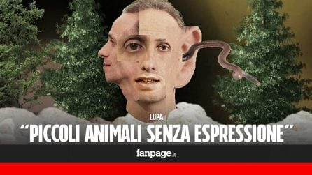 Lupa - Piccoli Animali Senza Espressione (ESCLUSIVA)