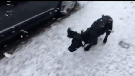 Non ha mai visto la neve: la reazione di questo cane è esilarante
