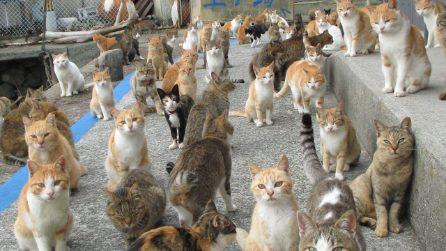 Si chiama Aoshima e si trova in Giappone, l'isola dove vivono più gatti che esseri umani
