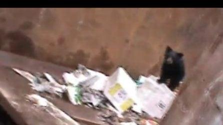 Scopre un piccolo orso intrappolato nel cassonetto: la coraggiosa reazione del ragazzo
