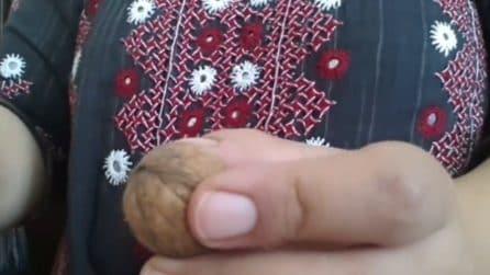 Come aprire le noci in pochi secondi senza lo schiaccianoci