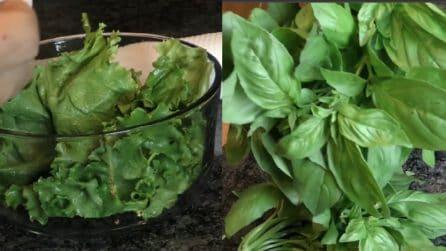Come conservare l'insalata e il basilico