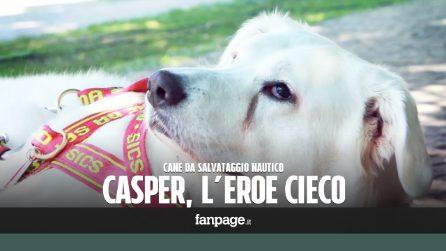 Casper, il primo cane da salvataggio cieco: era stato abbandonato, ora è un eroe