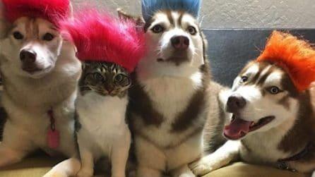L'incredibile storia del gatto che si sente un Husky e ci insegna ad amare oltre le differenze