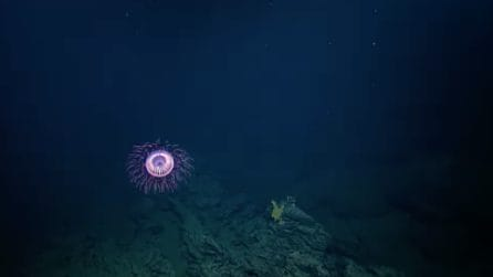 """""""Fuochi d'artificio in mare"""": la veduta magnifica negli abissi"""