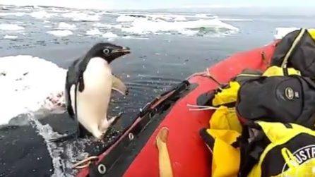 """Il pinguino """"curioso"""" salta improvvisamente sulla barca"""