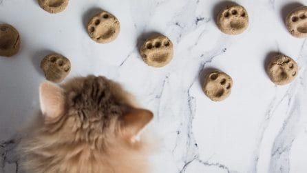 Cibo per gatti fatto in casa: la ricetta facile pronta in pochi minuti!