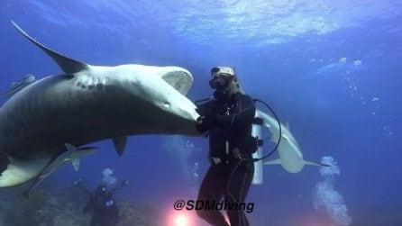 """Il sub spericolato """"danza"""" con gli squali: le immagini da brividi"""