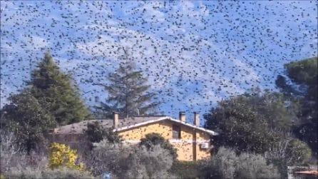 Milioni di storni invadono i Castelli Romani: le immagini impressionanti