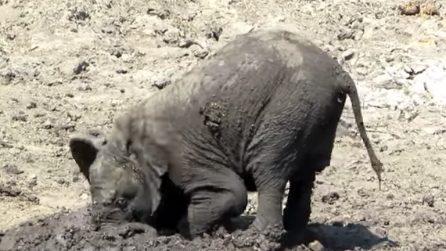 Il cucciolo di elefante adora il fango: le divertenti immagini
