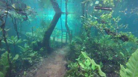 Un giardino incantato sommerso dall'acqua: lo strano fenomeno che affascina