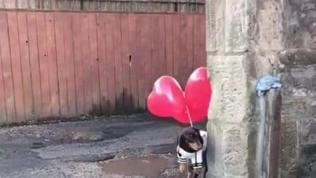 Lega i palloncini al bassotto e all'improvviso succede qualcosa di esilarante