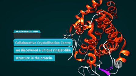 Nel latte dell'ornitorinco c'è una potente proteina antibatterica che può proteggere anche noi