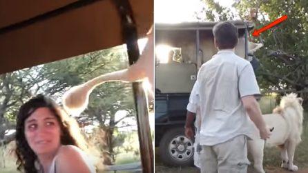 Un leone salta nella jeep degli studenti durante il safari: la reazione dei ragazzi