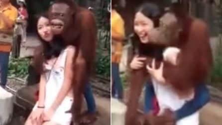 La scimmia palpa il seno della turista e prova a baciarla: l'imbarazzante incontro ravvicinato