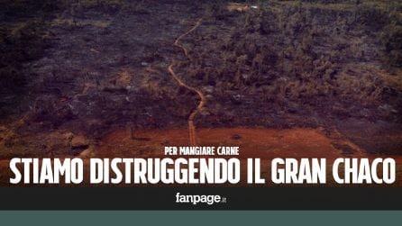 La devastazione del Gran Chaco: foreste distrutte per far spazio alla soia
