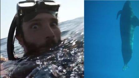 Immersioni subacquee per Stefano De Martino: incontro ravvicinato con un grosso animale